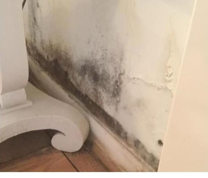 Mold, Mold Everywhere in Mobile, AL