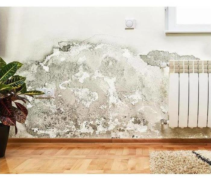 Mold in Your Home or Office